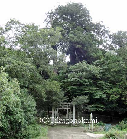 鳥居と二本杉